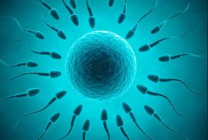 kualitas sperma