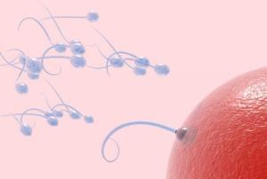 sperma 7