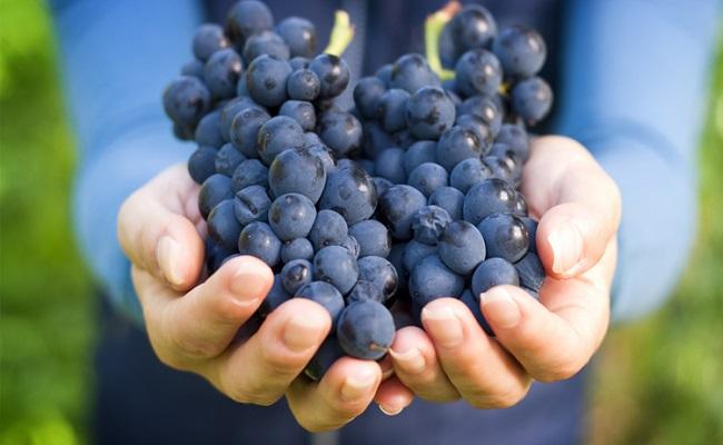 hamil-anggur